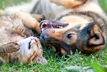 Chats et chiens mignons Ils sont mignons