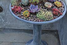 Succulent DIY ideas