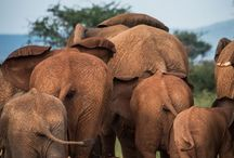Africa / Travel Africa - safari, jungles and wildlife.