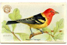 Pájaros vintage