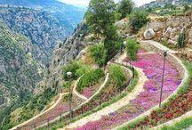 Near East ( Syria, Lebanon, Jordan, Palestina )