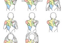 REF | Anatomy