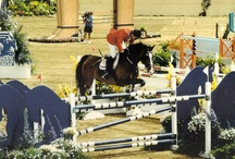 Top of the Sport / It's said every rider has that one special horse. I've been lucky enough to work with a few and see many amazing horse and rider combinations. / by Equestrian Coach
