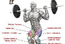 Men's Fitness / Men's Fitness