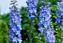 Perennials for Hummingbirds / Plant these perennials to help attract hummingbirds to your gardens.  Perennials will return year after year making them a great investment.