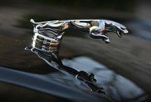 Jaguar / Detailing auta