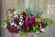 Blommor utemiljö