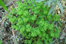 Plants & Weeds of Interest