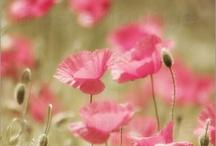 Campi fioriti