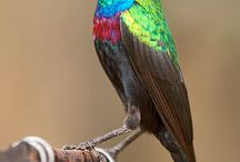 Birds, Animals and camps of KNP / Everything related to the Kruger National Park.
