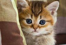 kočičí miláčci