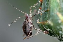 Insects: Garden Pests / by Oregon State University Extension Service