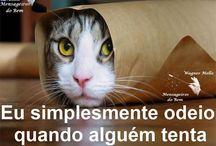 Loucuras de Gatos / Loucuras de amor & loucura de amor . Temos a melhor forma de homenagear e tornar seus momentos inesquecíveis