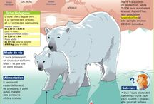 Thème : le Pôle Nord