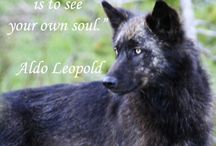 Mysterious Wolves / Loyal mysterious wolves...