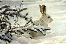 konijnen en hazen