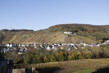 Goldener Oktober im November / Goldene Aussichten auf Ahrweiler