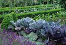 Kitchen Gardens / Inspiring food growing idylls