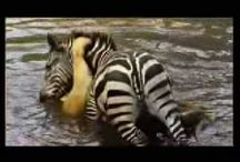 Állatok_Animals