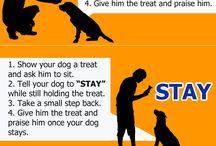 Teach pets