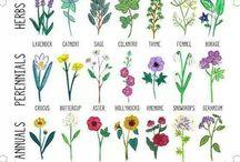 Gardening Infographics We Love