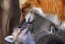 Foxy / by Alicia Anderson