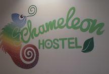 Chameleon logo / Chameleon logo across the entire wall!