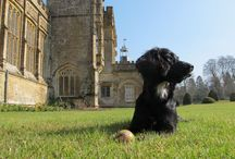 The Forde Abbey family / Meet Pixel, Twiglet and a whole host of ducks, chickens and horses when you come and visit Forde Abbey.