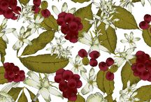 coffee plant illustration