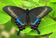 бабочки / о бабочках