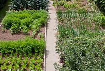 Lavakauluspuutarha - gardening