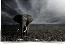 DUO and BW Photography #5 / Wildlife, landscapes and portraits in AFRICA