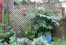 plants for ellies garden