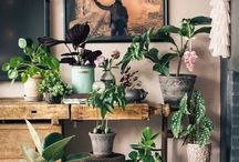 Paisagismo / Green decor