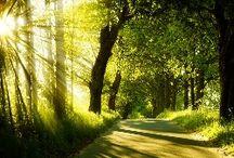Fotos Wald