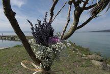 Wedding on Trasimeno Lake / Locations
