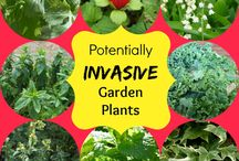 Gardening Ideas and Tips