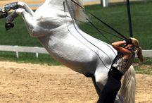 Équitation Horse riding