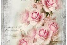 rózsa más képpen