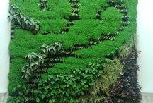 Mantenimiento y obras jardinería / Mantenimiento y obras de jardinería, paisajismo.
