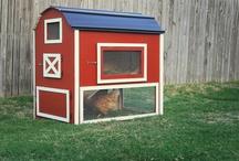 Backyard Farming and Home Inspirations
