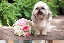 Wedding Dogs! / Engagement and Wedding photos with man's best friend!