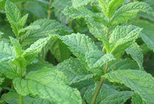 HerbsILove