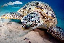 underwater pictures / underwater photography by Sven Gruse