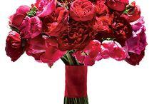 Nunta in rosu/Red Weddings