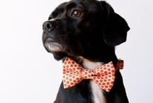 Pet stuff  / Dogs!  / by Addison Lofton