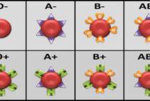 Blood Type Info.