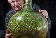 유리병 식물재배