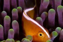 fish colours