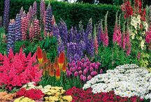 Hot bed / Hot coloured garden bed